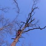 abbattimento-alberi2