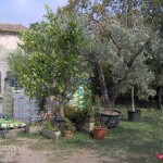 vendita-ulivi-secolari003