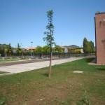 liceo-scientifico-este-DSCN8867